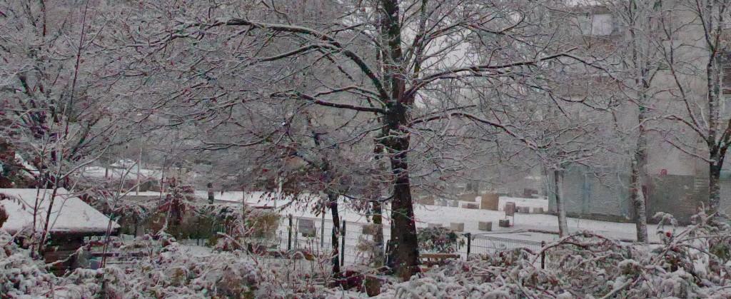 Jardin d'hiver chez les Poucets